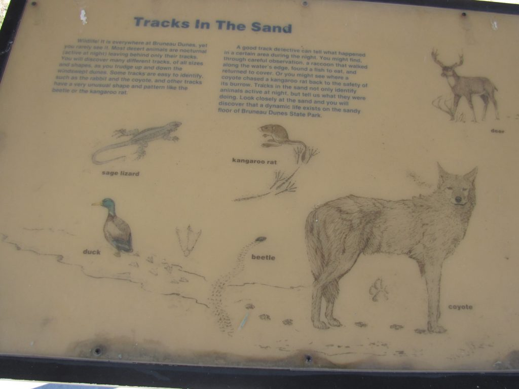 "This informative sign shows common animals in the Bruneau Dunes area. It's called, ""Tracks in the Sand""! Deer, coyote, sage lizard, duck, beetle, and kangaroo rats are listed!"