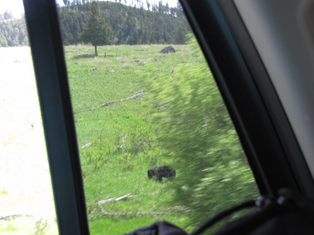 A bad photo of a small black bear, taken from the window of our car, grazes in a meadow.